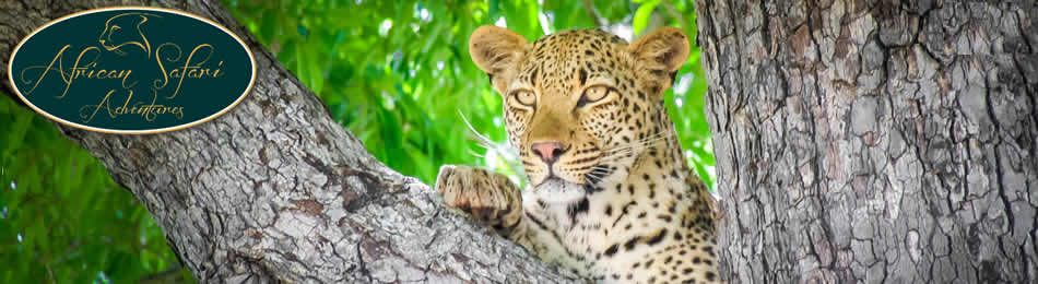 African safari Adventures - Mpumalanga Tours, Tours to Kruger Park, Tours to Mozambique, Tours to Zambia
