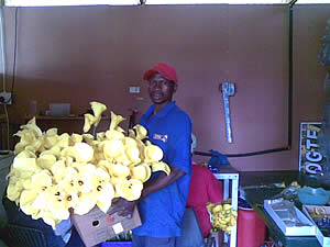 Yellow Arum Lilly Nursery for Sale in Mpumalanga